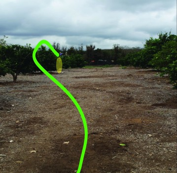 Since the open line down the gap doesn't play well for a left-handed backhand thrower, I'll toss the Evidence on a high anhyzer over the orange trees on Hole 16 at Kit Carson Park.